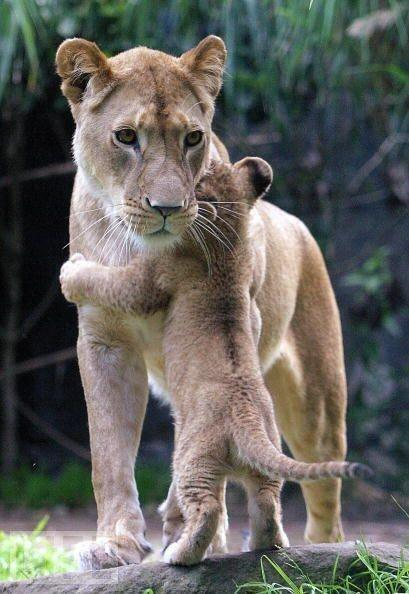 RT @ThatsEarth: I love you mommy http://t.co/Cy2wxbtRVs