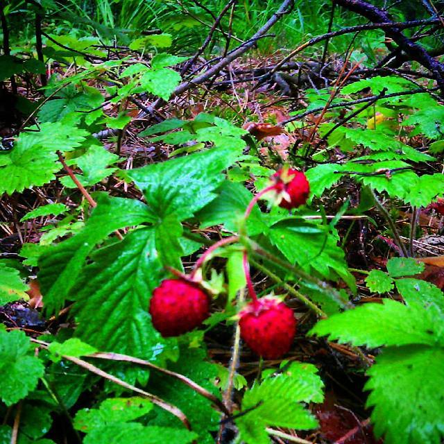 ягоды башкирии фото нет привычной городской