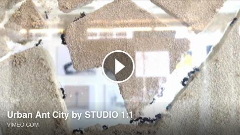 Afbeeldingsresultaat voor mierenstad rotterdam