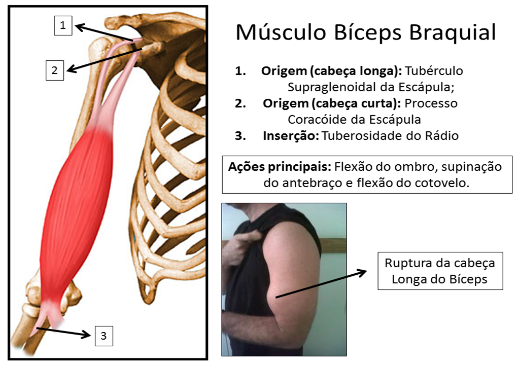 bícepsbraquial hashtag on Twitter