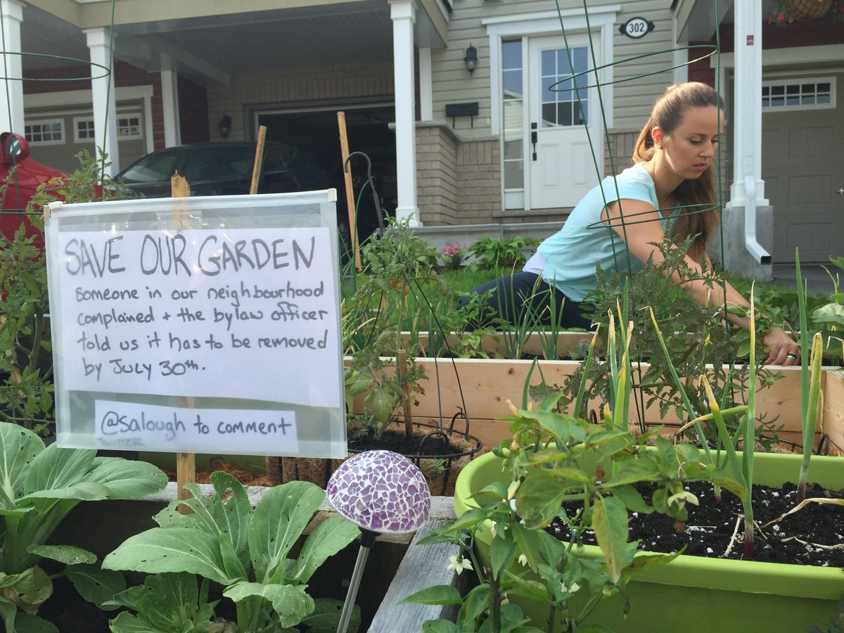 When is a green thumb a by-law violation? Once a neighbour complains #ottcity #ottnews   http://t.co/NUjq0KtvPO http://t.co/y5kPCHVnXm