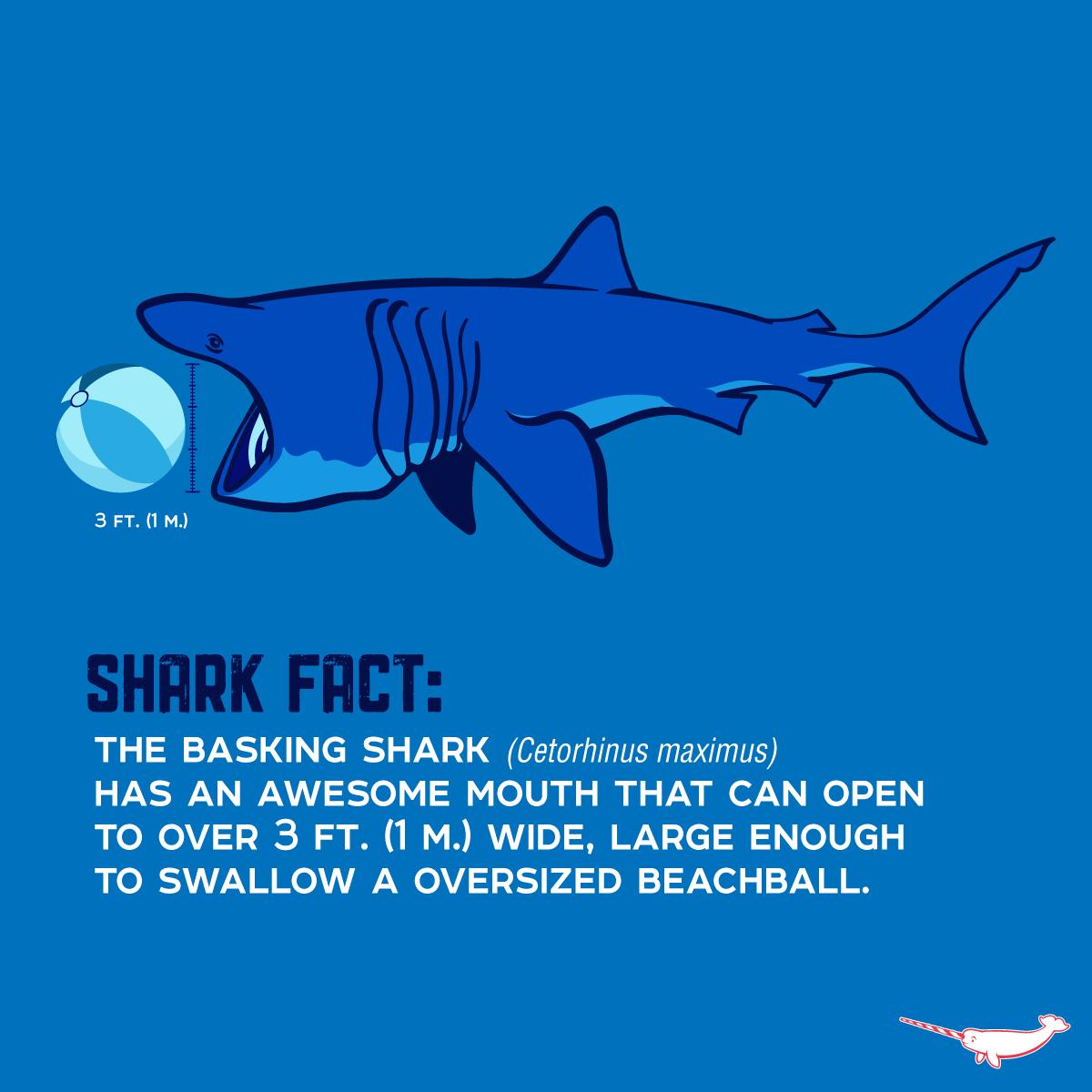 an analysis of the sluggish monster cetorhinus maximus the basking shark Populations & ecosystems monitoring & analysis a basking shark from the air researchers analyzed aggregations of basking sharks (cetorhinus maximus).