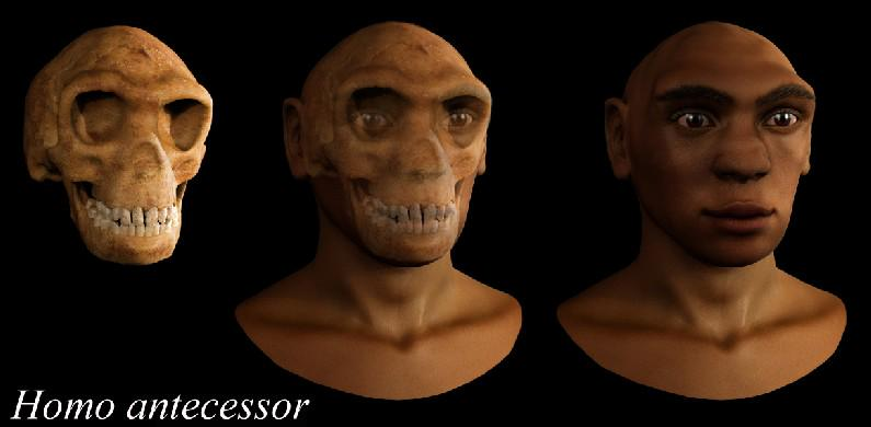 8 jul 1994 > Hallan en nivel TD6 de la Gran Dolina (Atapuerca) los restos de Homo antecessor.