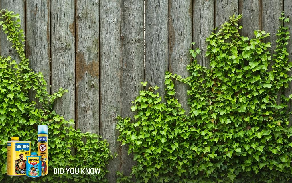 #DYK Improper planning of your garden can help #termites to enter into your house. Know more: http://t.co/XzY1vgmVix http://t.co/snobviXTqy
