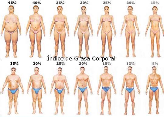 Imc y porcentaje de grasa corporal