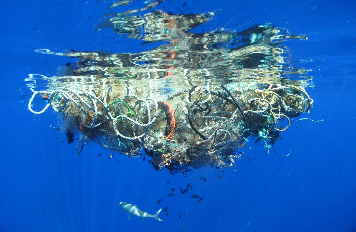 The Plastic You Use Is Killing Animals the World's Most Remote Islands http://t.co/wVlG51NrGh #plasticpollution http://t.co/uhn9hkTPj6