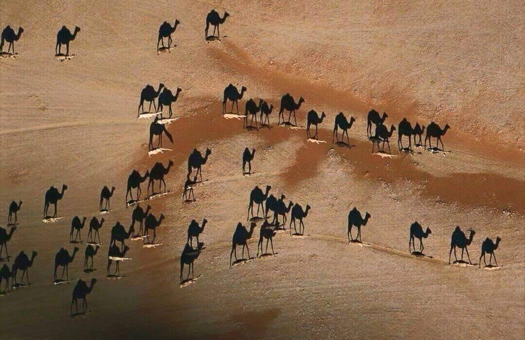 Foto sensacional: os camelos são os traços brancos, o resto é apenas sombra. http://t.co/yIlEfZBuYm