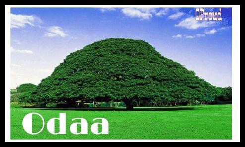 Bildergebnis für odaa tree