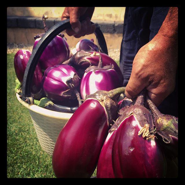 Aubergine season http://t.co/knqBAAkOJs