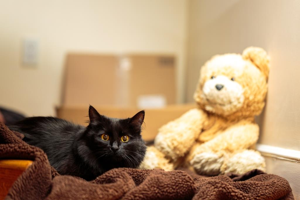 Beezy is looking for a new home! Her one condition is that you adopt her favorite bear too. http://t.co/0prtd6fEEt http://t.co/fH2z5l5yUs