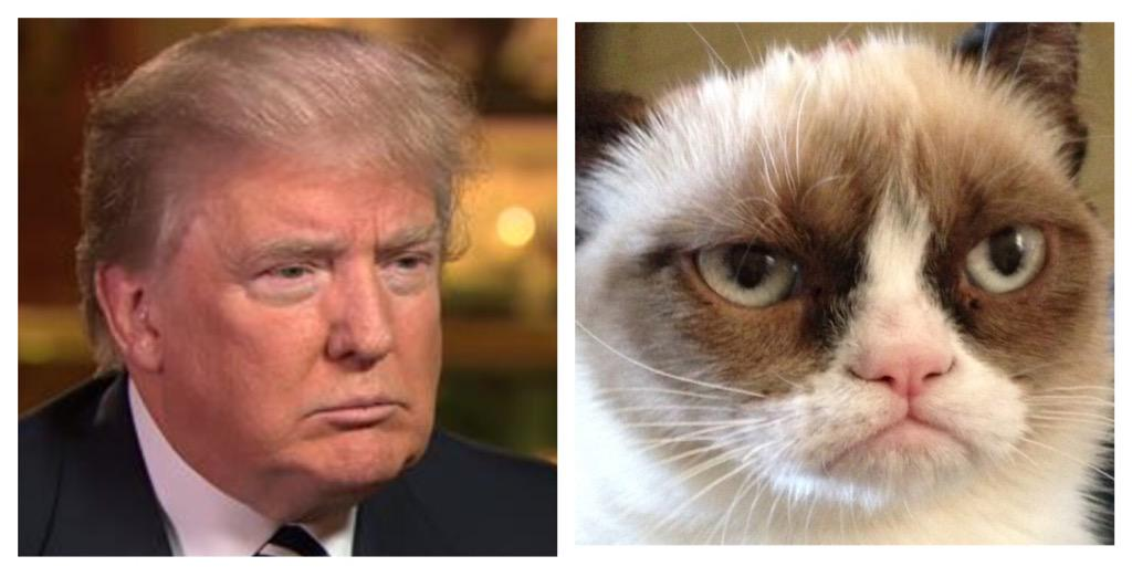The resemblance is uncanny. #DonaldTrump #GrumpyCat http://t.co/EeuEGZGQ6w