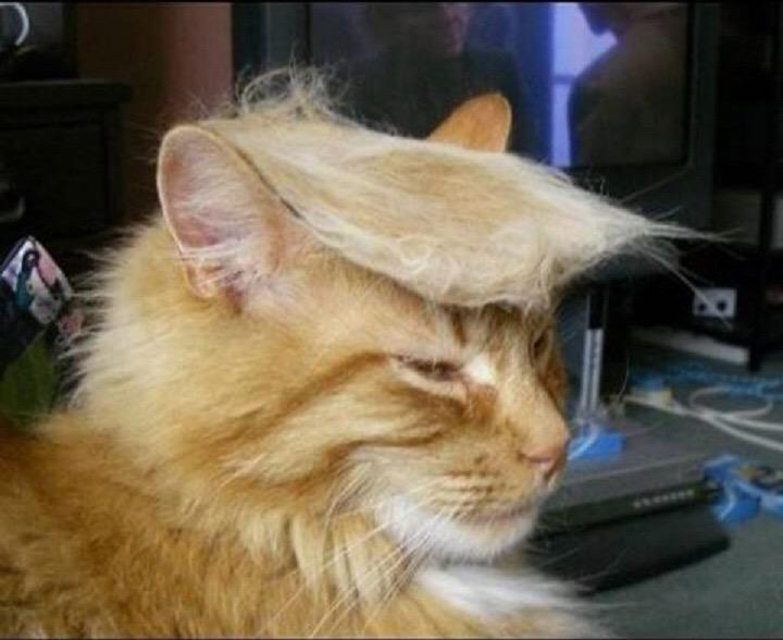 Omg #trumpyourcat is beyond making my life right now...... @maddow #winning http://t.co/XrkS08yUrM