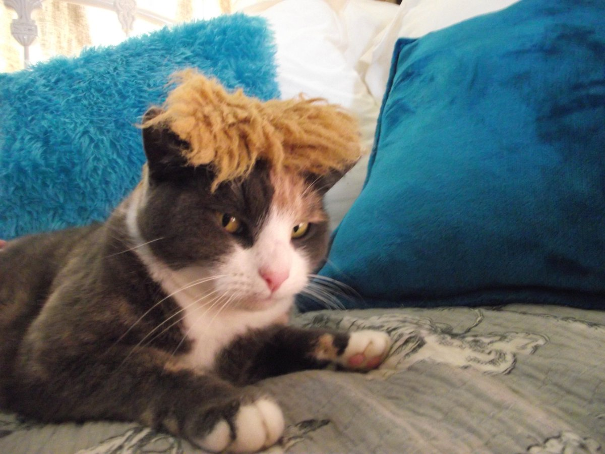 Awesome meme! RT @jeanne_daniel: It became absolutely necessary for me to share in #TrumpYourCat @maddow http://t.co/fwZ8Te3Gke