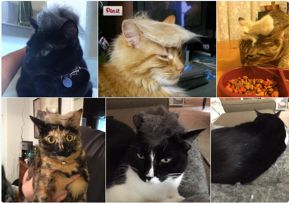 #TrumpYourCat might be the best hashtag ever. http://t.co/FIJB14BPzt