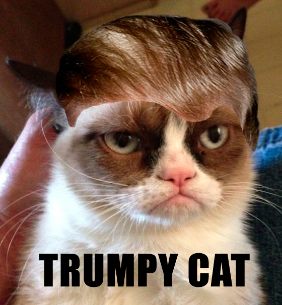#TrumpYourCat is now trending. Twitter finally caught up with what my brain was thinking over 2 years ago. #TrumpyCat http://t.co/Z7wGTdyJQz