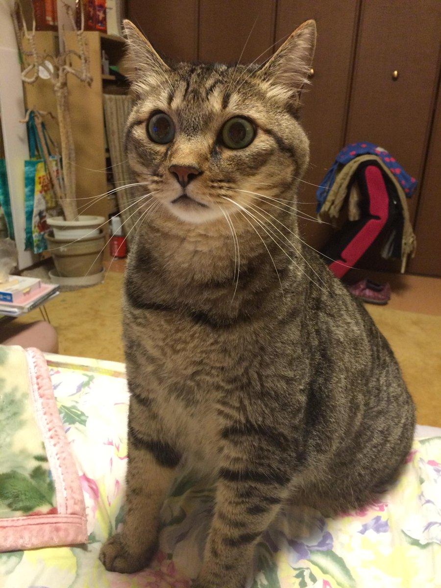 久々の地震で猫がすごい顔してるwwwww pic.twitter.com/DdQ39GklwJ