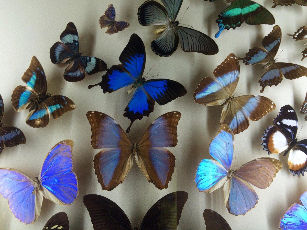 A flutter of #symmetry @AudubonNature #mathphoto15 http://t.co/5jy8cBlUIA
