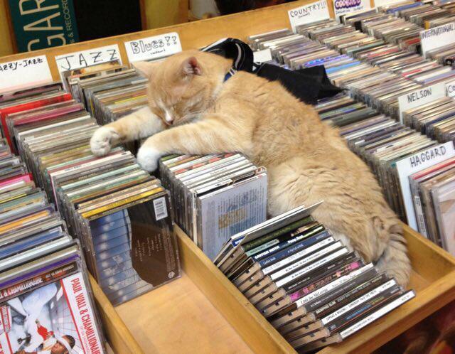 ネコがいるレコ屋を検索、興奮を禁じ得ない pic.twitter.com/f0MSK9NhRH