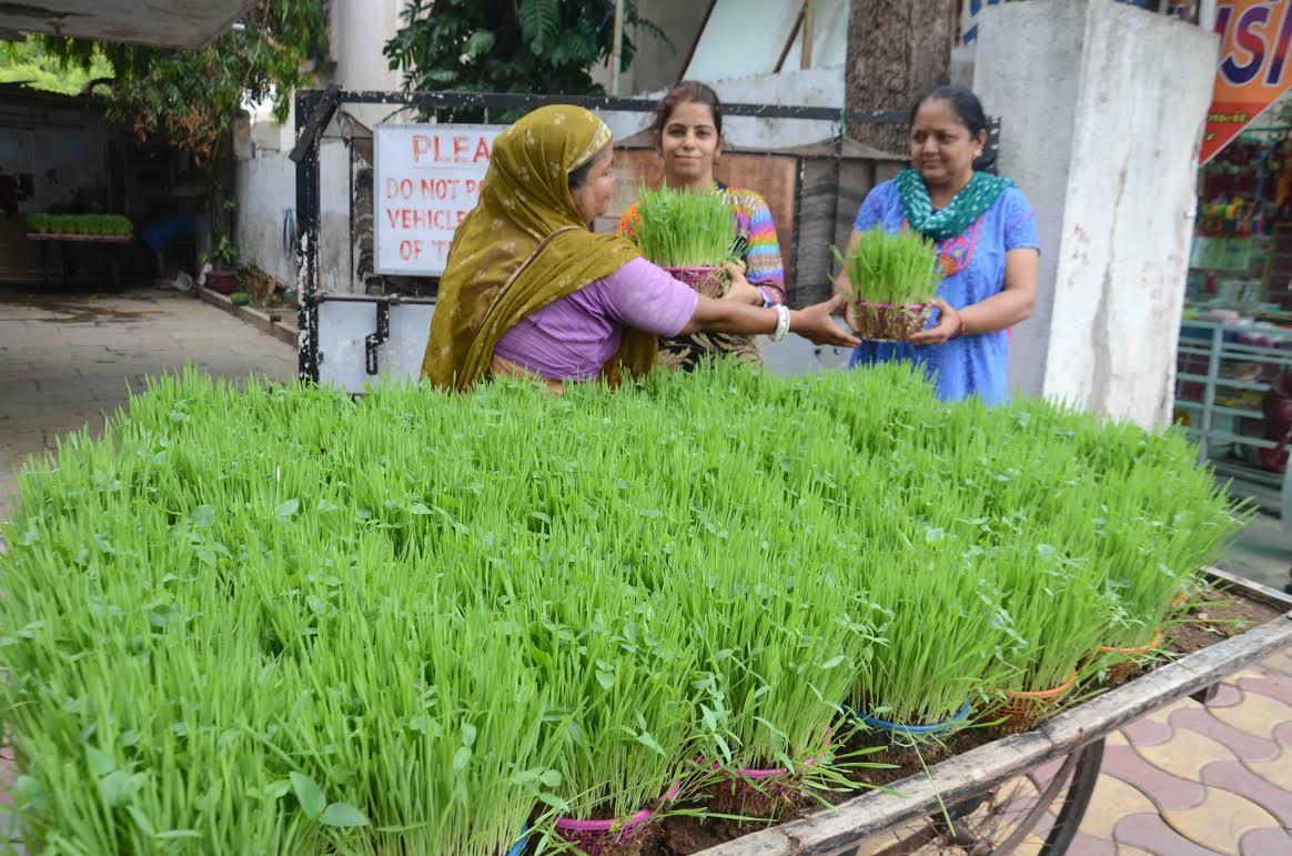 Chaturmas 2021 begins in Gujarat on July 20, will continue till November 14