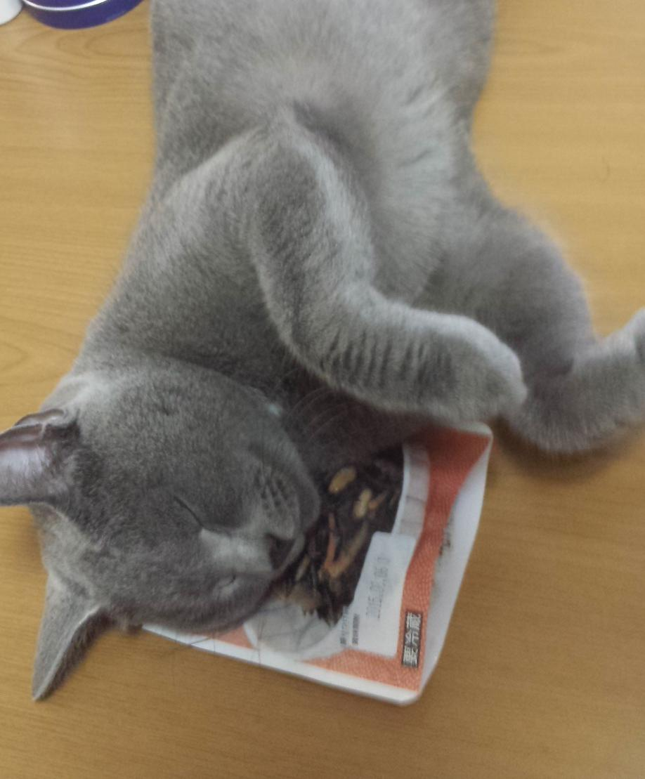 朝ごはんのおかずにしようと、わざわざコンビニまで行ってひじき買ってきたのに、灰色の妖怪がひじきを枕にして寝始めたので、ひじき食べれない。 pic.twitter.com/0IckZDUIOj