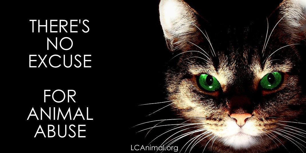 "Animal Abuse Quotes Glamorous Lastchanceforanimals On Twitter ""there's No Excuse For Animal"