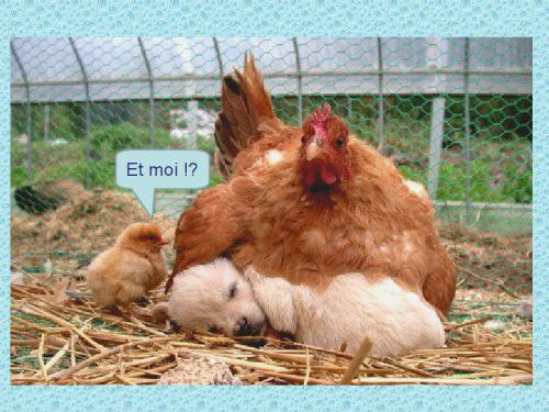 Préférence animaux drôles (@animaux_droles) | Twitter TK82