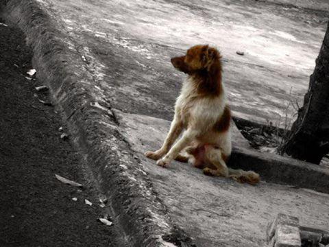 MPE pede à Justiça que Cuiabá adote medidas para retirar 11 mil animais das ruas http://t.co/l5Bs5O6LSi http://t.co/sWIxfKuglx