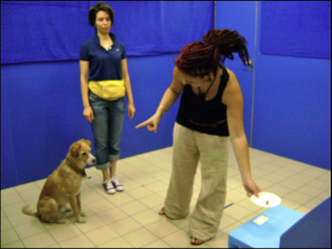 #IAmAScienceDiplomat Surrounded by Dogs. My latest at @sciamblogs http://t.co/f9C54yUNLz http://t.co/PGAs33Mm04