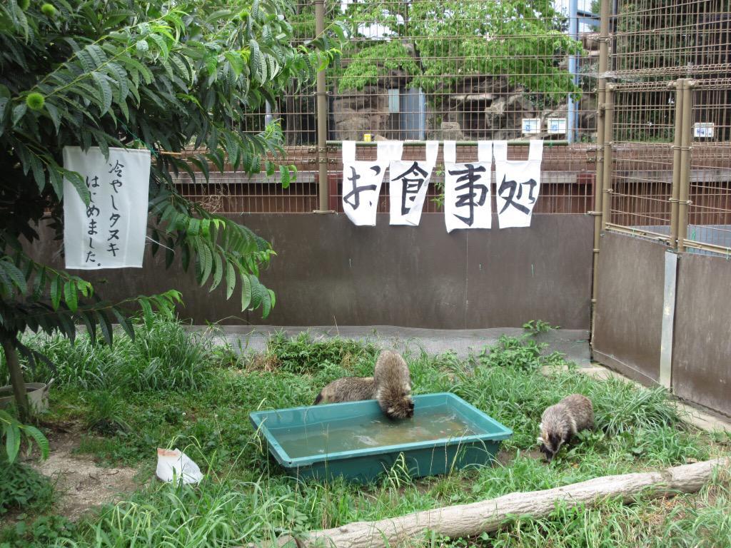 東武動物公園です☆冷やしタヌキはじめました(笑) pic.twitter.com/O8XUbds7uG