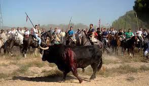 No es una foto del siglo XIV. Es del siglo XXI. Lo llaman fiesta. La MIERDA de la fiesta del Toro de la Vega. Asco. http://t.co/5RISlKJPMh