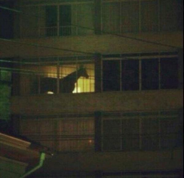 Whatever my new white neighbor does when the lights go out is her business http://t.co/QEXo4fwvdd