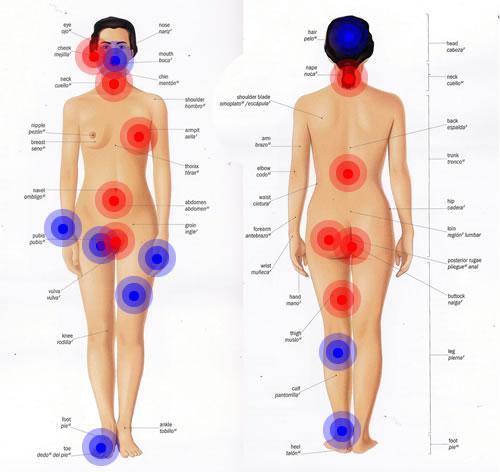 Partes sensibles sexualmente de la mujer