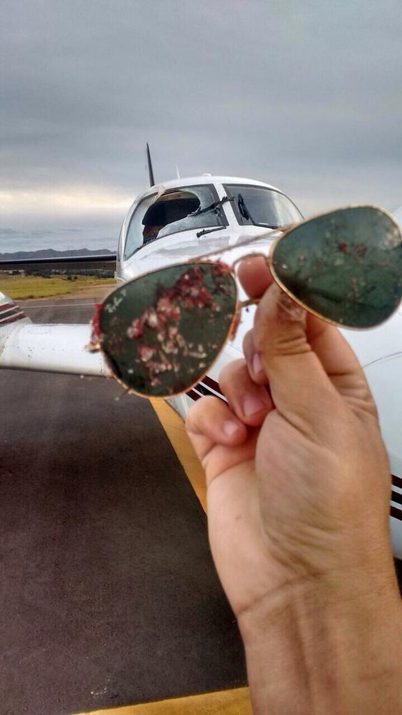 [Brasil] Avião colide com ave em pleno voo, tem para-brisa destruído e segue rota CKUeUDfWoAAos7t