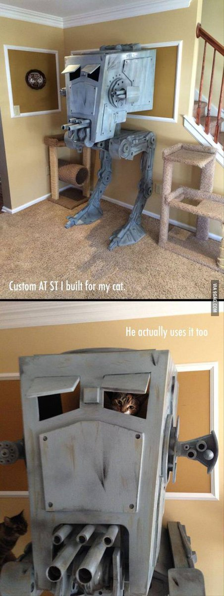 Catmosphere Sydney On Twitter Catstoryoftheday Via 9gag Best Cat House Ever Http T Co Oec45xiel4 Cats Catsoftwitter Starwars