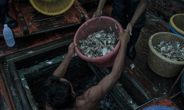 fishing in thailand the issue of overfishing human trafficking and forced labor
