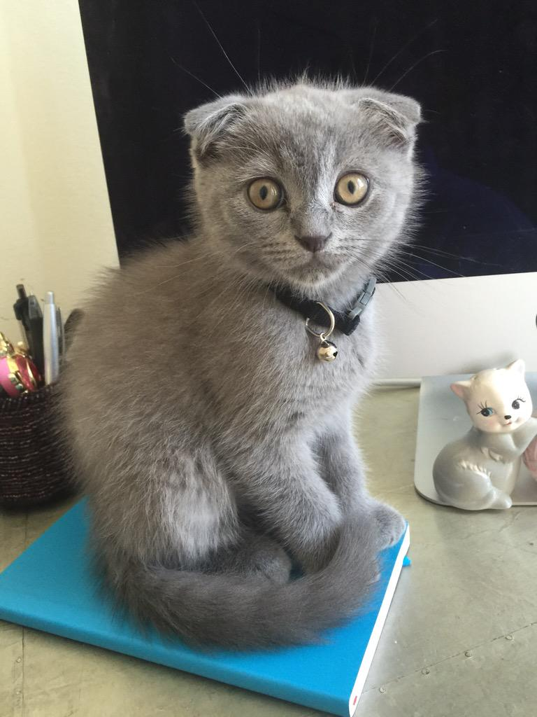 22 Kitten Reactions For Everyday Situations