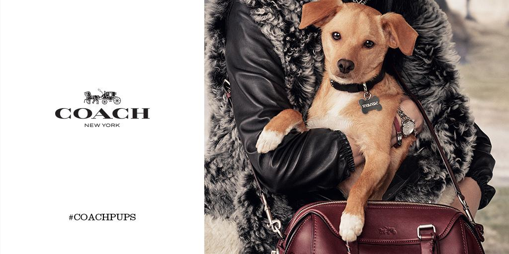 Who's that dog? It's Toulouse Grande, the newest star of our #coachpups campaign. (Photo: #StevenMeisel)