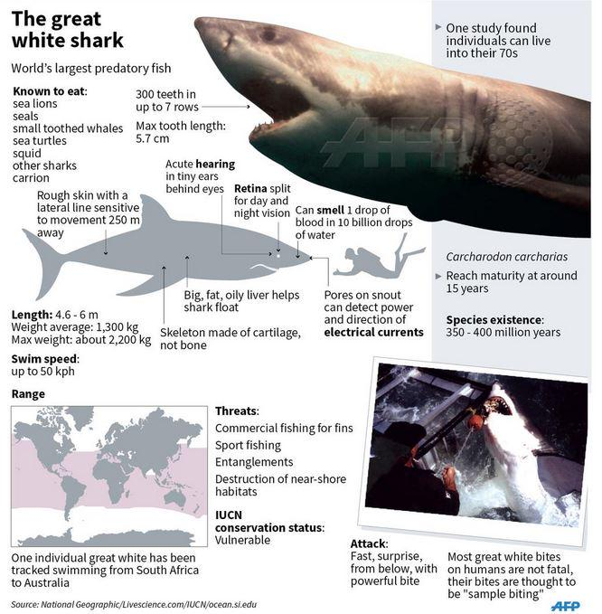 facts about the great white