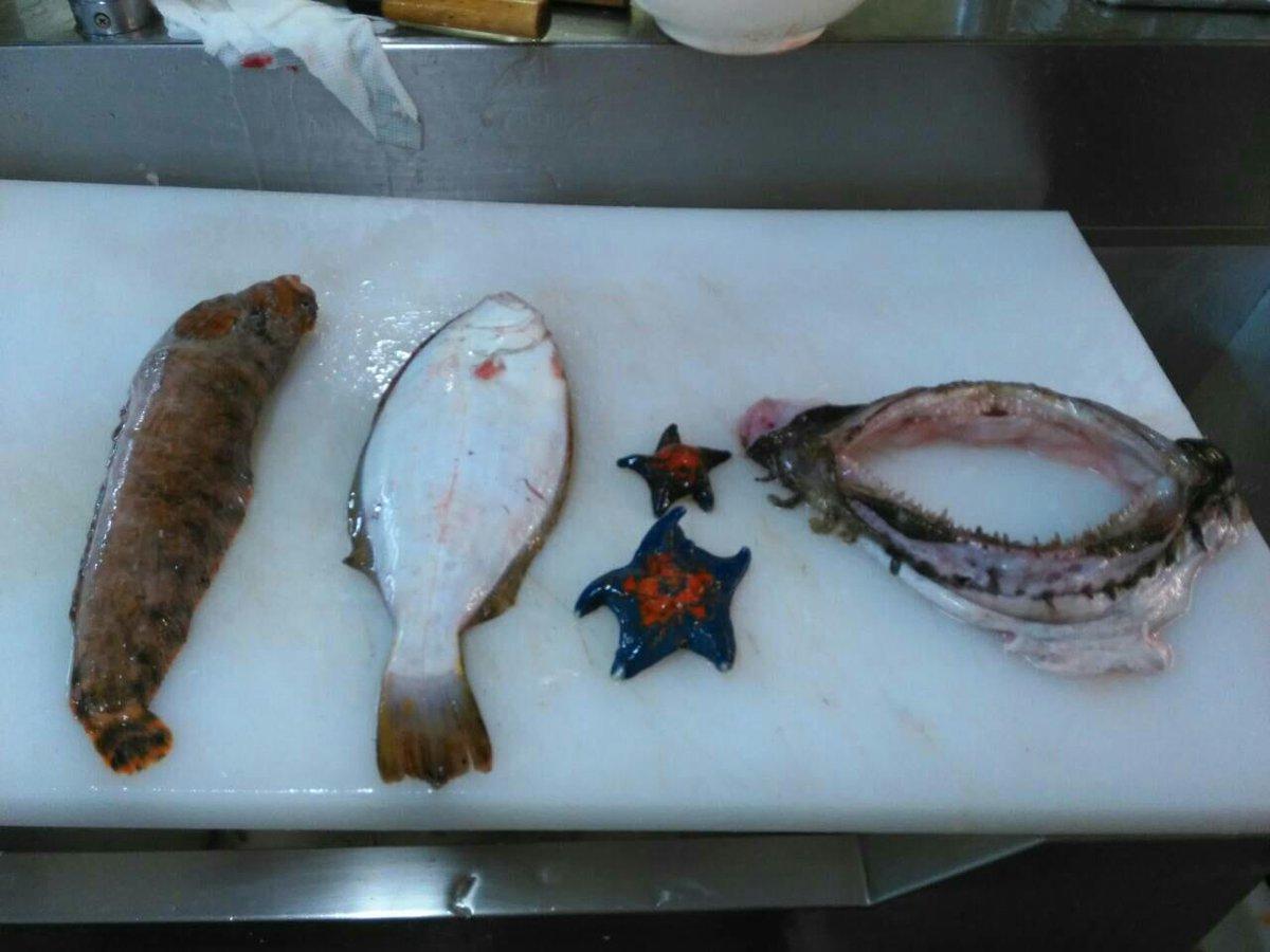 魚屋の友人がアンコウさばいたら、胃の中から35センチの巨大アイナメとヒラメ、ヒトデが出てきたそうです。こんなデカいの丸呑みとは…。そして、ヒラメとアイナメの胃の中にも小魚とか甲殻類いると思うと野生ってスゴイ http://t.co/zMtqBRNafT