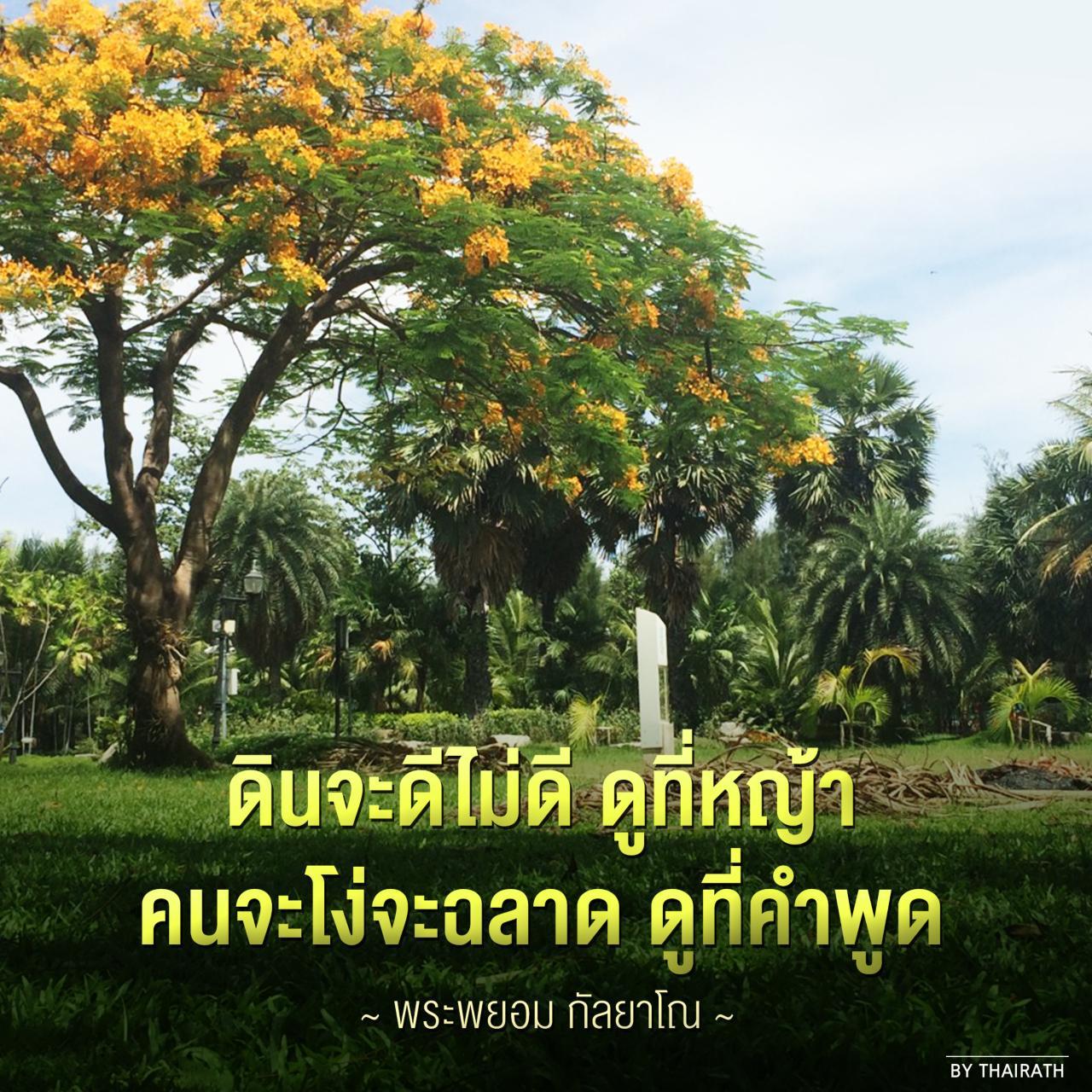 """Thairath_News on Twitter: """"ดินจะดีไม่ดี ดูที่หญ้า คนจะโง่ ..."""