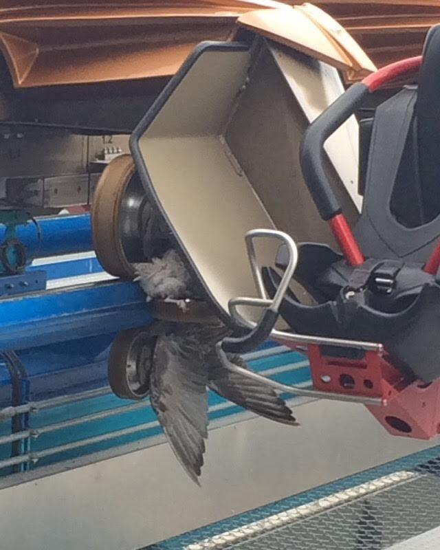Fresh photo from Cedar Point, seems a seagull played chicken with Gatekeeper today and lost. Ouch!! #deadbird http://t.co/udQ8658B3F