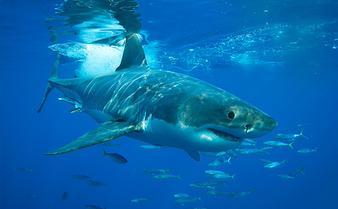 Monterey Bay Aquarium on Twitter: