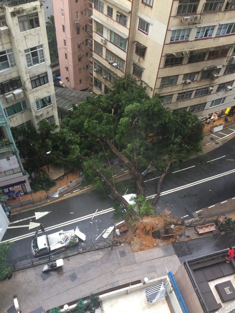 More photos from right after it fell. #SaiYingPun #SaiWan #BanyanTree #BonhamRoad http://t.co/ZsaNMkcfCF