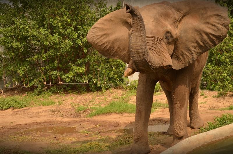 El elefante del Zoo necesita más espacio, ya es hora de que #MudemosAZoobaq #ConsejodeMinistros @EmisorAtlantico http://t.co/z1H3vYsgCZ