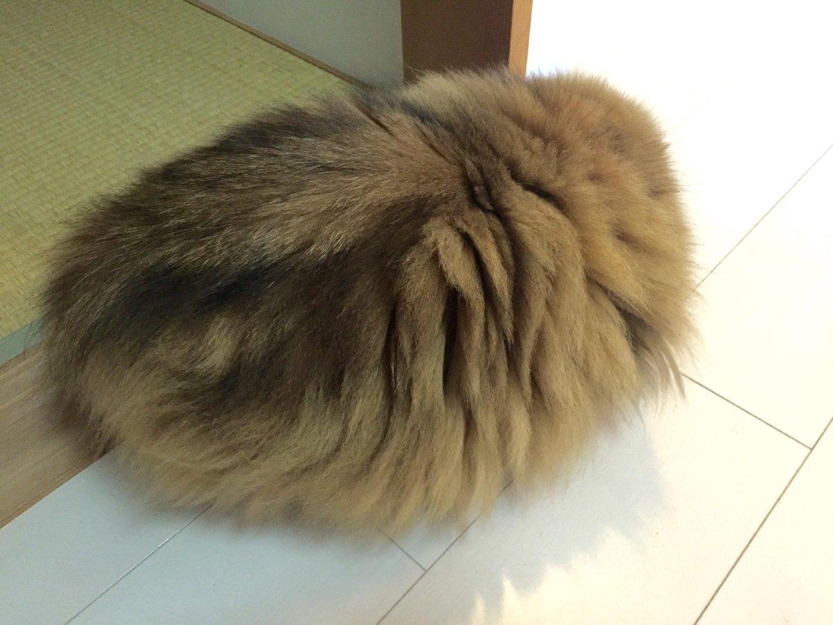 猫の定義をぐらつかせる丸さ。@婿 pic.twitter.com/wJpBSQvh7V
