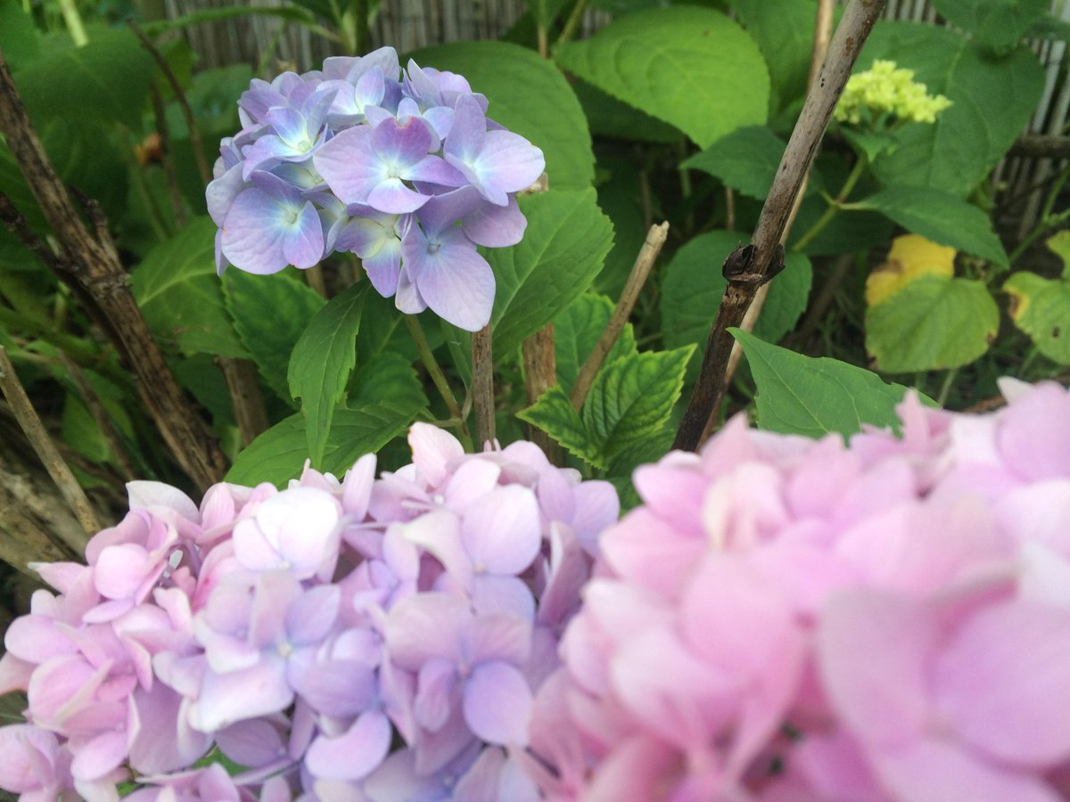 The hydrangea is a flower of flower #units #mathphoto15 http://t.co/qmnP0bfoYM