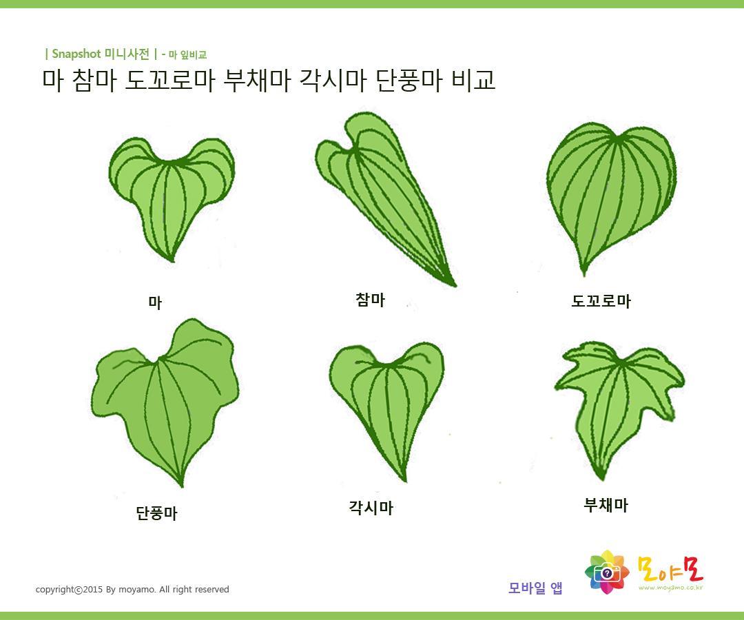 '마' 종류 잎으로 식별하는 그림입니다. http://t.co/UBycTgqYd5