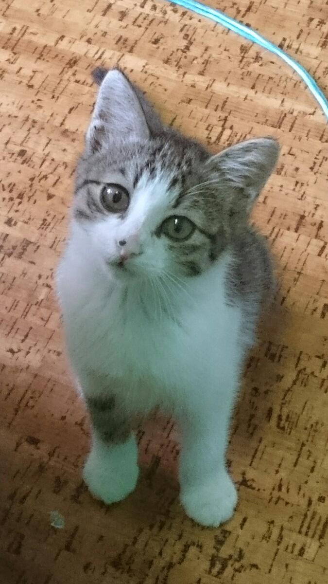 帰宅したら自宅に子猫がいた。 pic.twitter.com/JNdj69J6tI