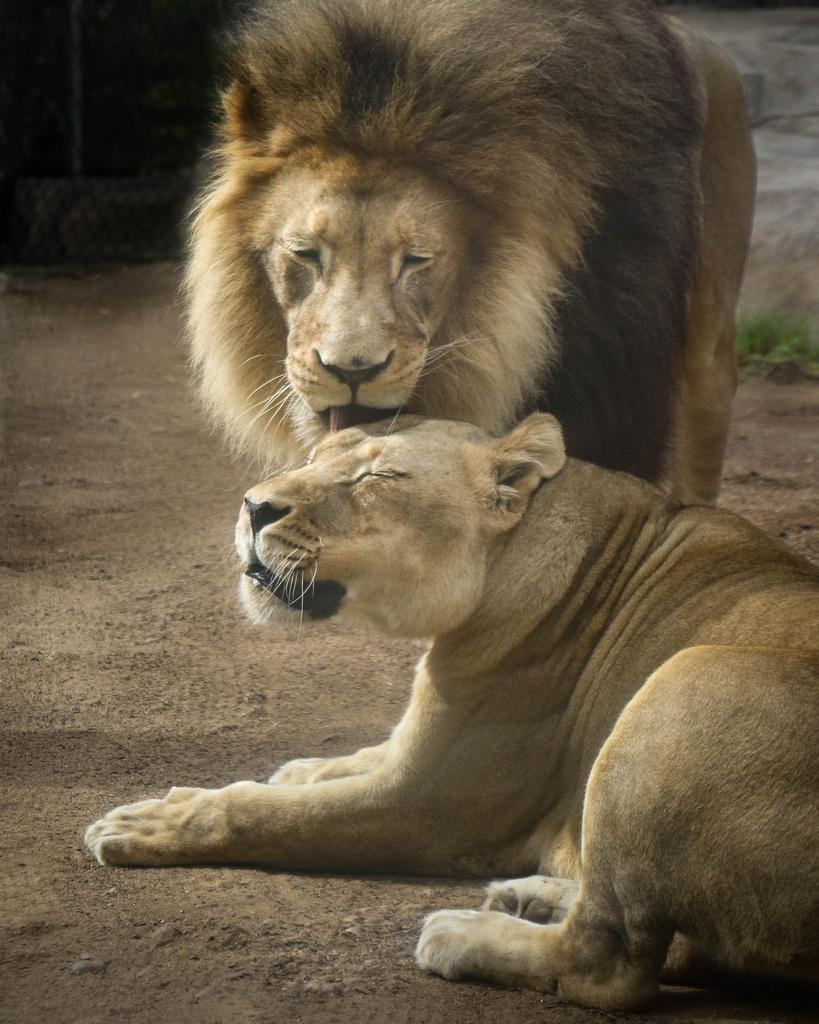 лев в любви знакомства