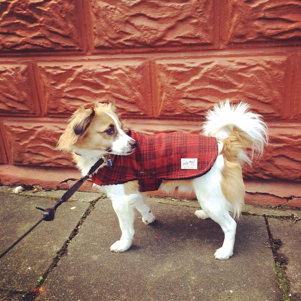 Billy Wolf Dog Coat Uk